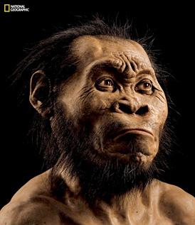 Vignette de l'actualité Homo naledi, une nouvelle espèce d'hominidé